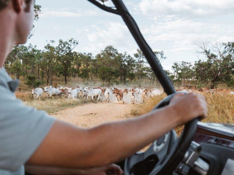self drive with animals - mount mulligan