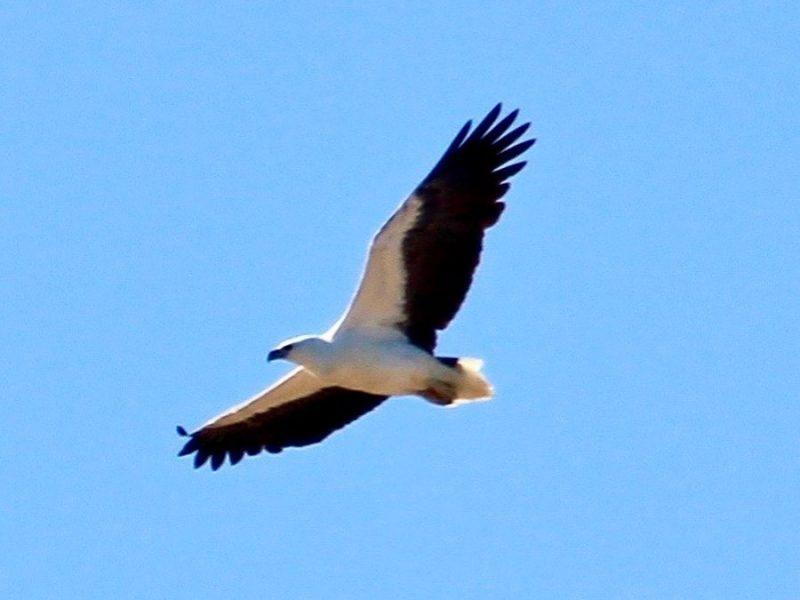 safaris bird