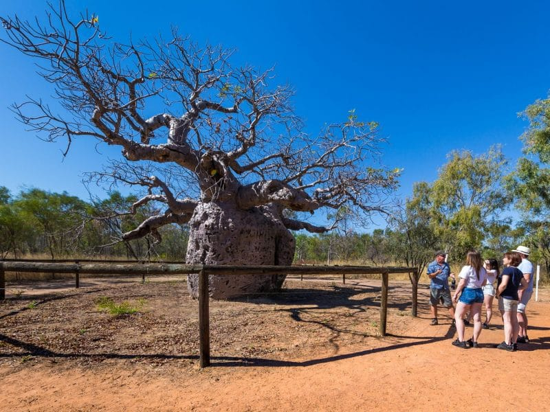 Boab Tree Family Guide
