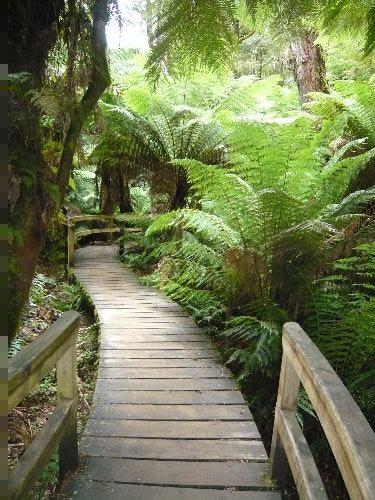 Rainforest Walk Australian Natural Treasures