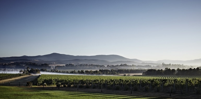 vineyard yarra valley